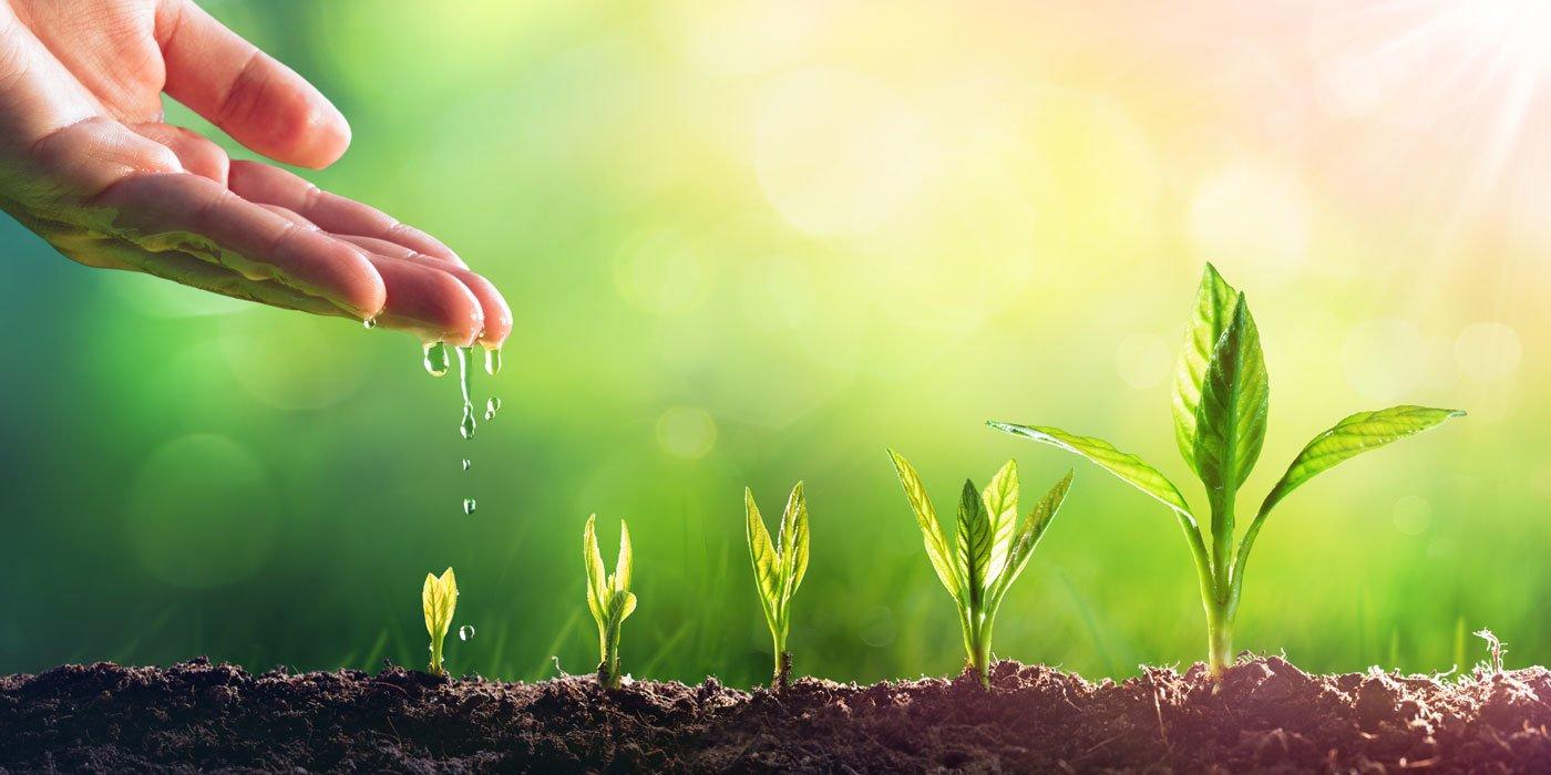 Pflanzen in unterschiedlichem Wachstumsstadium
