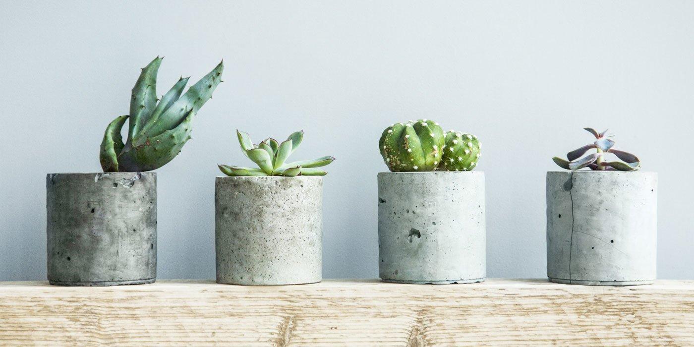 Vier Pflanzen in Pflanzkübel stehen auf einem Tisch