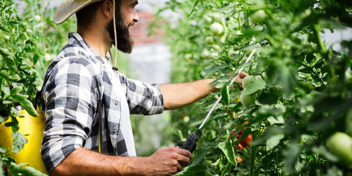 Ein Mann besprüht Pflanzen im Freien mit einer Gartenspritze