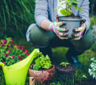 Eine Person mit Blumentopf und Handschuhen bei der Gartenarbeit