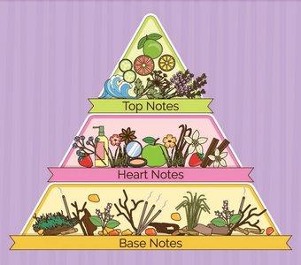 Duftpyramide mit ihren drei Duftphasen