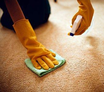 Ein Teppich wird mit Handschuhe und geeigneten Reinigungsmittel gereinigt