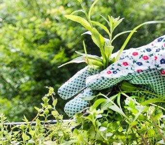 Unkraut jäten mit Garten-Handschuhe