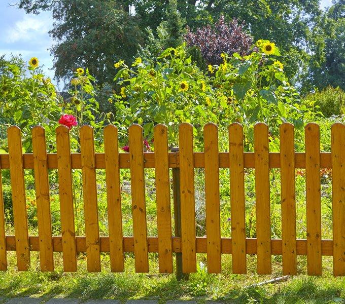 Holzzaun vor einem Garten mit blühenden Sonnenblumen
