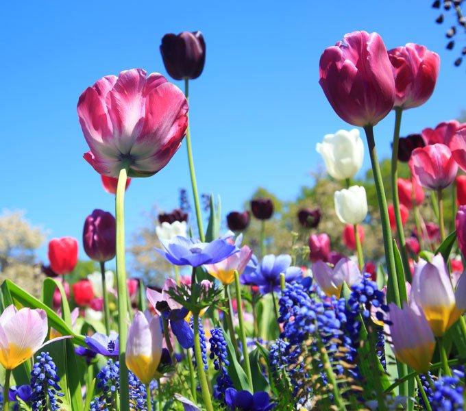 Wiese mit verschiedenen Frühjahrsblühern