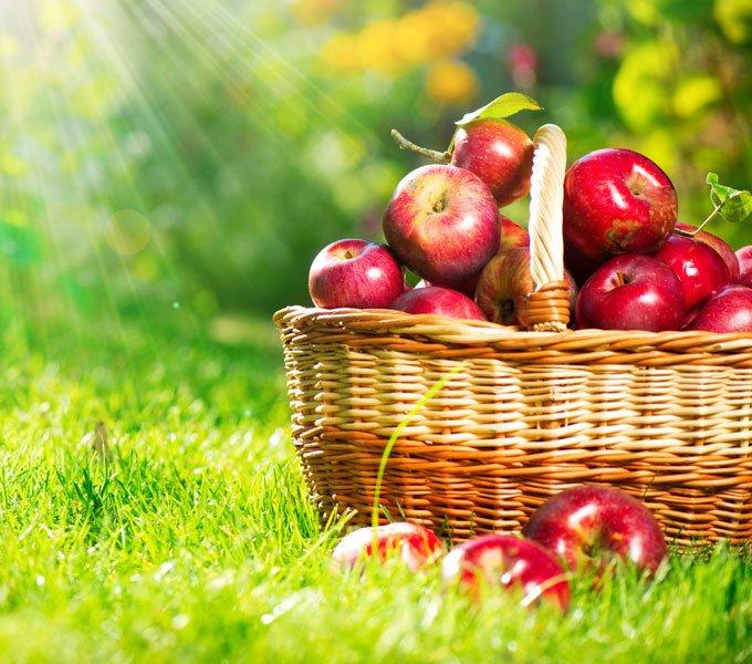 Korb mit Äpfeln auf einer Wiese