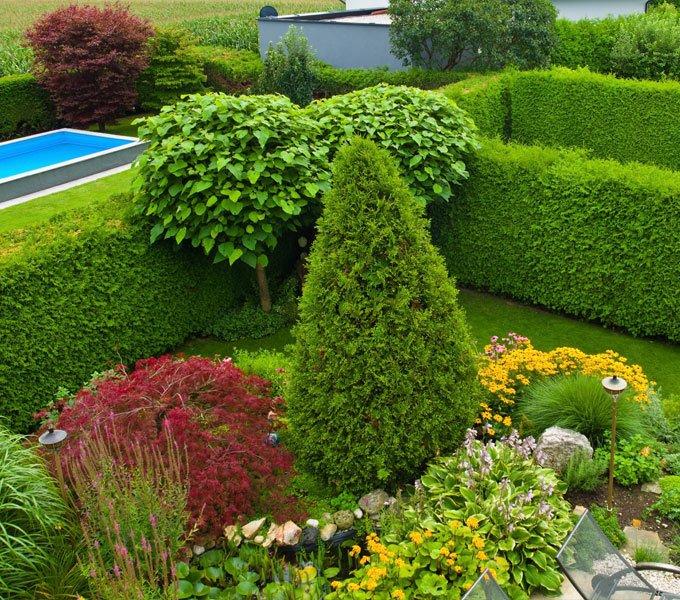 Garten, der durch mehrere Hecken strukturiert und vom Nachbargrundstück abgegrenzt ist