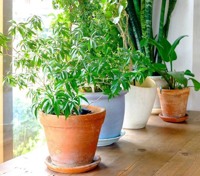Vier Pflanzen stehen in einem Blumenkübel vor dem Fenster im Wohnzimmer