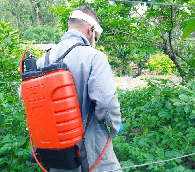 Ein Mann verwendet ein Rückensprühgerät im Garten