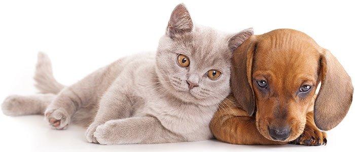 Nahaufnahme eines Hundes und einer Katze.