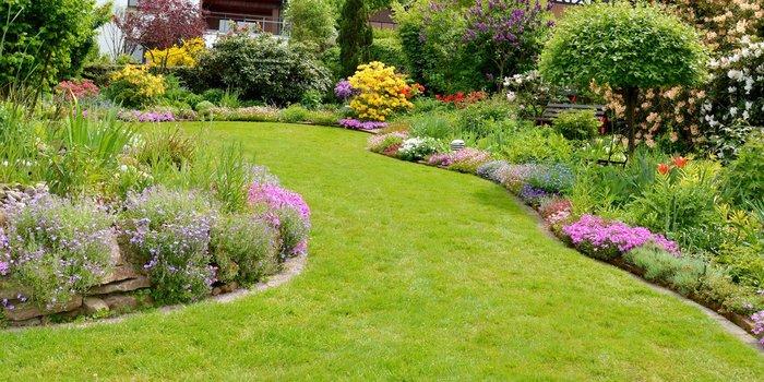 Verschiedenen Pflanzen in einem Garten
