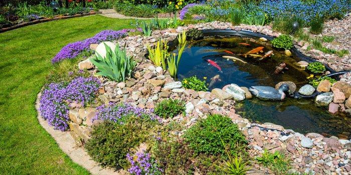 Teich im Garten mit fischen und Pflanzen