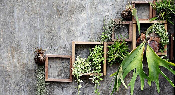 Aufnahme eines dekorativen Pflanzenregals an einer grauen Wand.