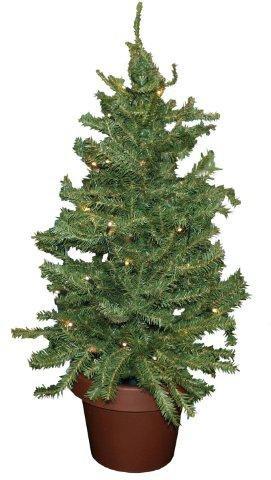 Weihnachtsbaum Im Topf Geschmückt.Weihnachtsbaum Im Topf